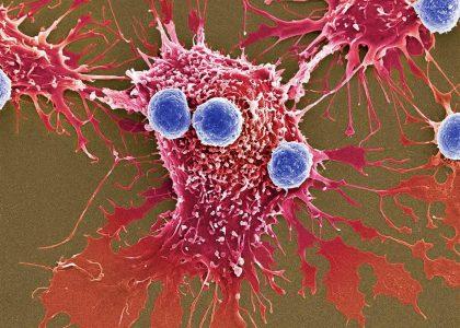 פמיניזם זה סרטן