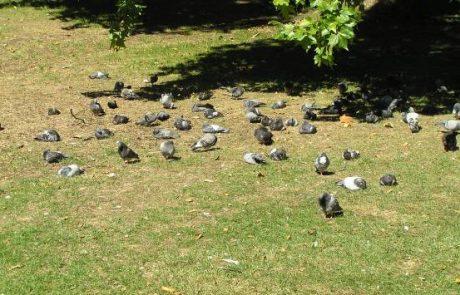 קן לציפור בן העצים ובקן גוזלים רעבים!
